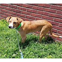 Adopt A Pet :: PHILLY - LaGrange, KY