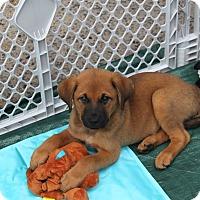 Adopt A Pet :: Professor Hinkley - Jackson, TN