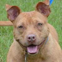 Adopt A Pet :: Dixie - Natchez, MS