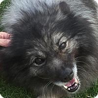 Adopt A Pet :: HAILEE - Southern California, CA