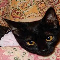 Adopt A Pet :: BOBBIE - Upland, CA
