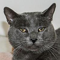 Adopt A Pet :: Ricky - Prescott, AZ