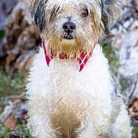 Adopt A Pet :: Karlo - San Diego, CA