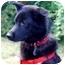 Photo 1 - Border Collie/Spitz (Unknown Type, Medium) Mix Dog for adoption in Baldwin, New York - Jeanie