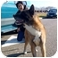 Photo 1 - Akita Dog for adoption in East Amherst, New York - Easy