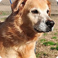 Adopt A Pet :: Maggie May - New Canaan, CT