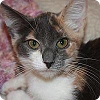 Adopt A Pet :: Nickel (LE) - Little Falls, NJ