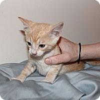 Adopt A Pet :: Muggles - Austin, TX