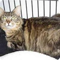 Adopt A Pet :: Tabitha - Modesto, CA