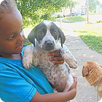 Adopt A Pet :: Smokey - Cincinnati, OH