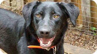 Border Collie Mix Dog for adoption in Manhasset, New York - Sophie