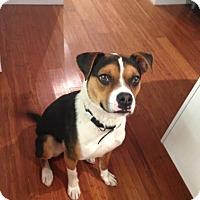 Adopt A Pet :: Marshall - Hamilton, ON