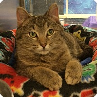 Adopt A Pet :: Kenny - Byron Center, MI