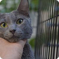 Adopt A Pet :: Mamas - Brooklyn, NY