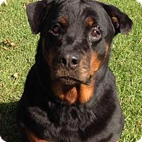 Adopt A Pet :: Odessa - Alachua, GA