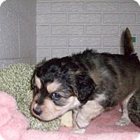 Adopt A Pet :: Baby Anna - Augusta County, VA