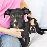 Adopt A Pet :: Stella - Tanner, AL