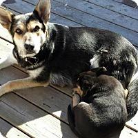 Adopt A Pet :: Momma - Saskatoon, SK