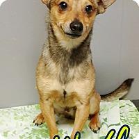 Adopt A Pet :: Wolfy - Odessa, TX