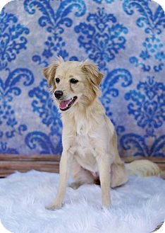 Chihuahua Mix Dog for adoption in Fort Atkinson, Wisconsin - Carmela