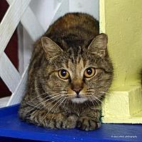 Adopt A Pet :: Ducky - Tucson, AZ