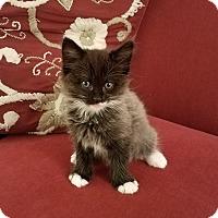 Adopt A Pet :: Mosby - Richmond, VA