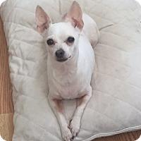 Adopt A Pet :: Angel - Vacaville, CA