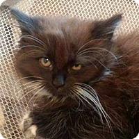 Adopt A Pet :: Ernie - Rochester, NY