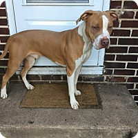 Adopt A Pet :: Diesel (COURTESY POST) - Baltimore, MD
