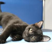 Adopt A Pet :: Jack - St. Petersburg, FL