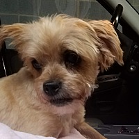 Adopt A Pet :: Dutchess - New York, NY