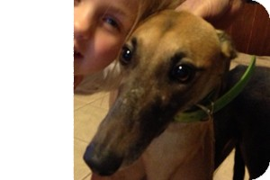 Greyhound Dog for adoption in Pearl River, Louisiana - Corey