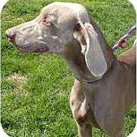 Adopt A Pet :: Syruss - Attica, NY