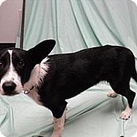 Adopt A Pet :: Megan - dewey, AZ