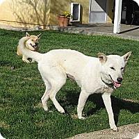 Adopt A Pet :: Jangmi - Southern California, CA