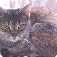 Adopt A Pet :: Sally - Lunenburg, MA