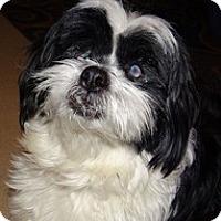 Adopt A Pet :: Dani - Wilmington, MA