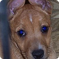 Adopt A Pet :: Streak - Marshfield, MA