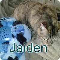 Adopt A Pet :: Jaiden - declawed senior sib - Rochester, NY
