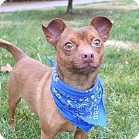 Adopt A Pet :: Griffin - Mocksville, NC