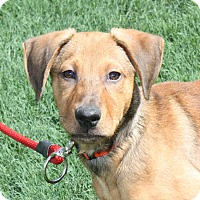 Adopt A Pet :: Howie - PENDING - kennebunkport, ME