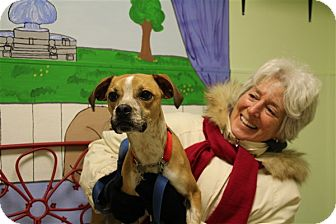 Boxer Mix Puppy for adoption in Elyria, Ohio - Butters