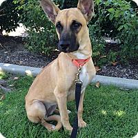Adopt A Pet :: Dorothy - Mission Viejo, CA