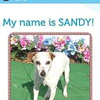 Adopt A Pet :: Sandy/GA - Columbia, TN