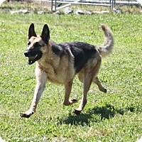 Adopt A Pet :: Cujo - ADOPTED! - Jewett City, CT