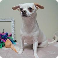 Adopt A Pet :: Violet (D17-095) - Lebanon, TN