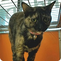 Adopt A Pet :: Fudge - Elyria, OH