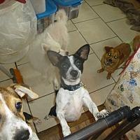 Adopt A Pet :: Petey - Glastonbury, CT