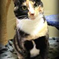 Adopt A Pet :: Naava - Crossfield, AB