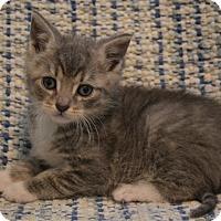 Adopt A Pet :: Frito - Oyster Bay, NY